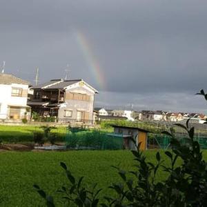 台風一過後の虹