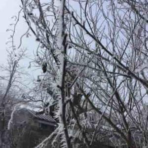 町中で 樹氷 をどうぞ ・・・
