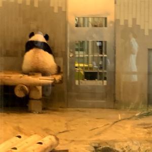 上野動物園♡