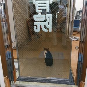 これって「招き猫」?