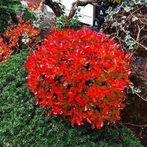 ひときわ美しかった紅葉