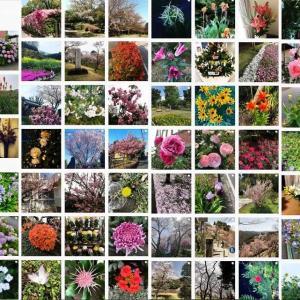 今の世の中、まわりには花があふれている!