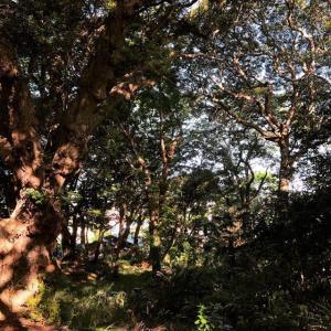 気が(木が)森が充満した一日