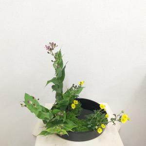 写景盛花様式本位 ホトトギス