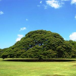 この木なんの木〜