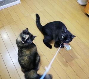 【悲報】猫用オモチャ3分で壊れる