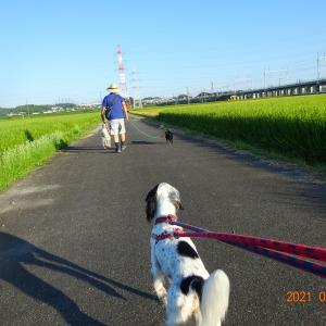 今日も朝散歩