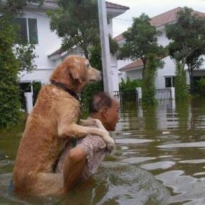 災害映像に映り込む「愛犬」とあちきらと動物愛護は・・・。