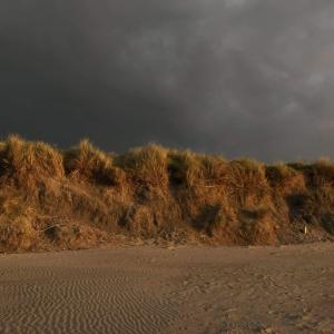 黄金の夕方は浜辺でゆったりと