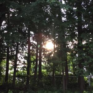 夏至の日のメッセージ