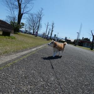 いいお天気でした。。。