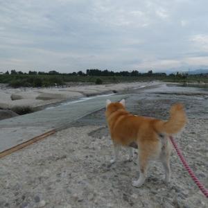 今日は川…。昨日は海…。