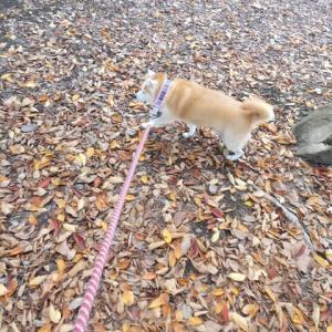 落ち葉のじゅうたん。。。