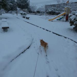 雪や♬コンコン(^^♪