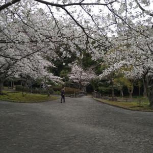 桜の花見(まとめ)