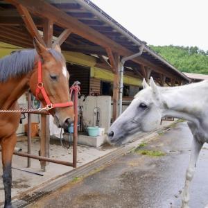 霧の中を乗馬クラブへ・・・