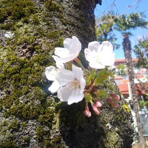 春の知らせ