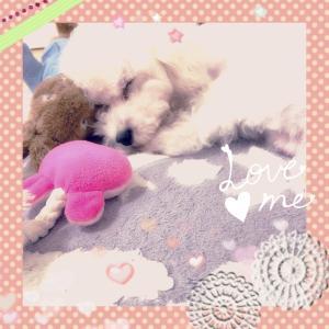 ♪ぬいぐるみを枕にして寝る犬♪