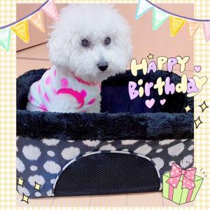 ♪愛犬2歳のお誕生日とプレゼント♪