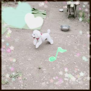♪走りながら笑う犬♪