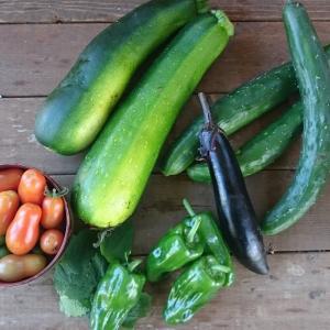 8月19日の野菜たち