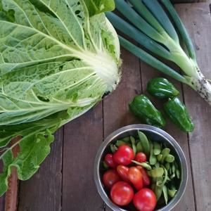 はくさい、ねぎ、枝豆収穫
