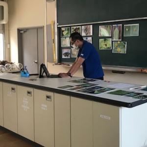 理科室から3年生の3教室に、テレビでオオムラサキのリモート授業