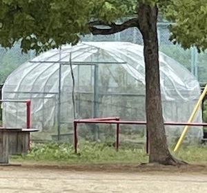 オオムラサキ3令幼虫を子ども園へ。蝶の小屋の幼虫が全滅。