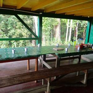 (閲覧注意)ロストワールド・食虫植物ウツボカズラの秘境へ12 雨の中の来訪者