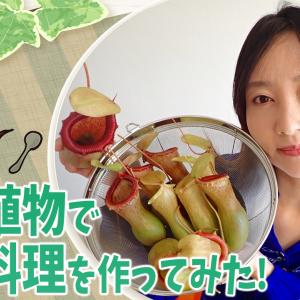 食虫植物料理の動画をつくったよ