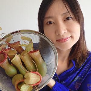 食虫植物料理ウツボカズラ飯のレシピ動画を作りました