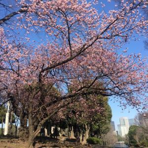 早春の散歩道