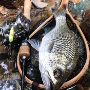 ぶらり渓流ミキユー釣行。