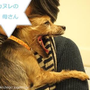 小型犬プロモーション。