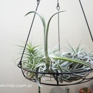 植物とてっちゃんと。