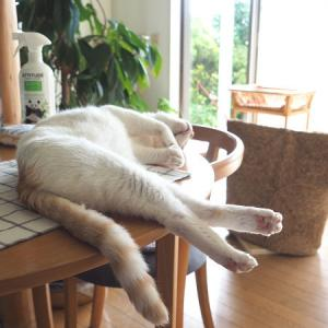 猫のおしごと。