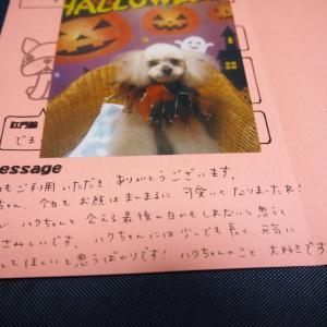 目標!可愛いおじいちゃん犬