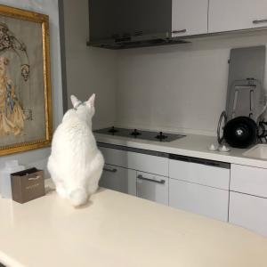 お手伝いするネコ