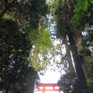 九頭龍神社は工事中 お参りできます