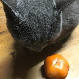 (*・ω・)ノ…☆ 鰹節の方がいっか☆だよねぇ。五角形の柿☆
