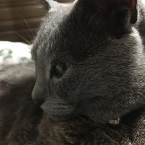 ( ´ ▽ ` )ノおやすみ☆