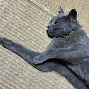(´・∀・`)猫落ちてると言うらしい☆おやすみなさい