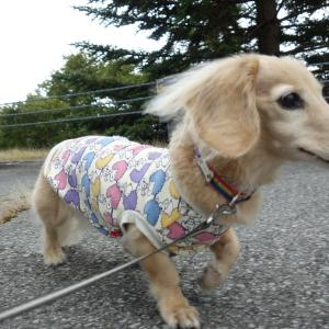 ナナの新しいお洋服