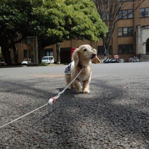 ナナ、東京大学で