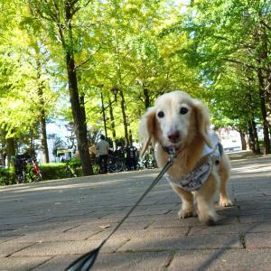 ナナと城北中央公園へ