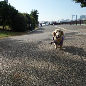 ナナと久しぶりにお台場 海浜公園でお散歩