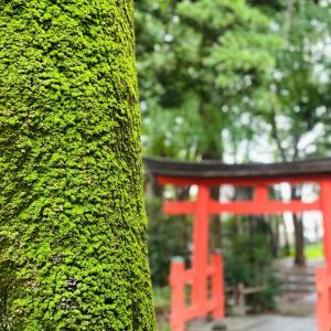 雨の朝の神社