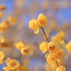 黄色の刺激