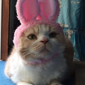 福ねこ写真展 ねこウサギちゃん