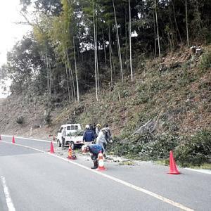 主要道路の危険木の除去協同作業